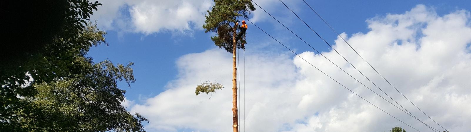 kácení-stromů
